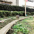 Photos: 猫撮り散歩2365