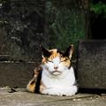Photos: 猫撮り散歩2366