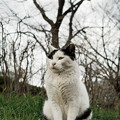 Photos: 猫撮り散歩2370