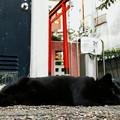 Photos: 猫撮り散歩2371