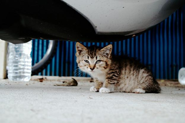 猫撮り散歩2373