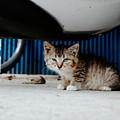 Photos: 猫撮り散歩2373