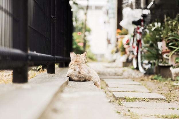 猫撮り散歩2377