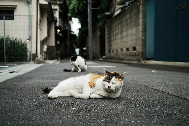 猫撮り散歩2382