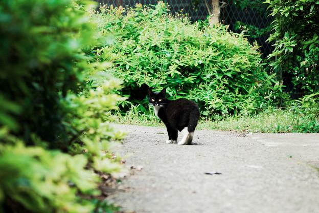 猫撮り散歩2384