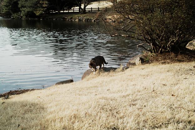 猫撮り散歩2393