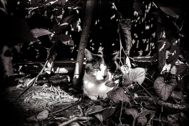 猫撮り散歩2399