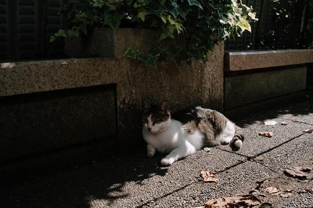 猫撮り散歩2410