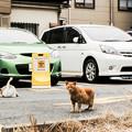 Photos: 猫撮り散歩2411