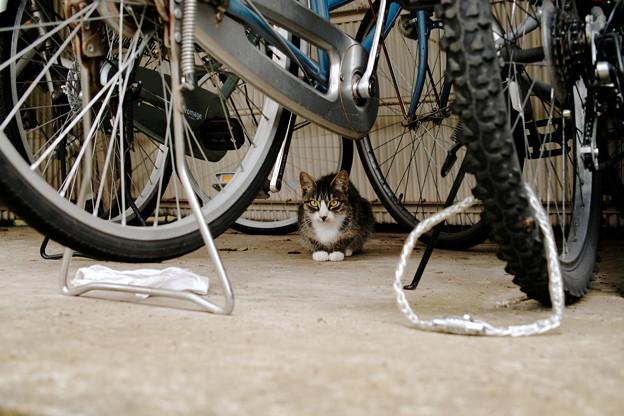 猫撮り散歩2413