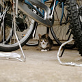 Photos: 猫撮り散歩2413