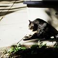 Photos: 猫撮り散歩2414