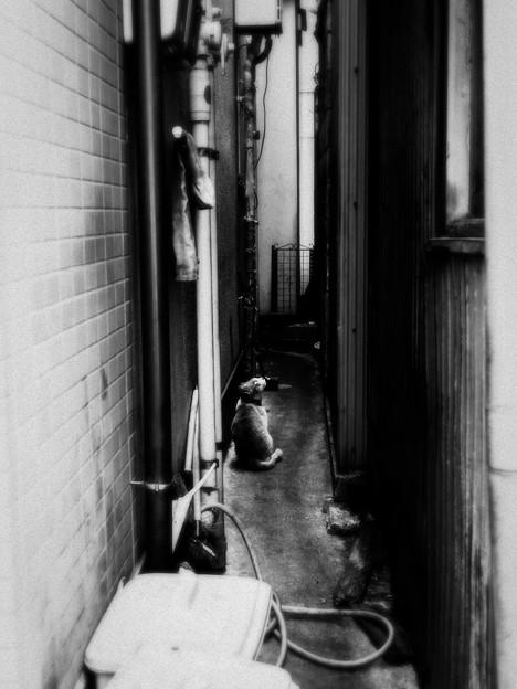 猫撮り散歩2415