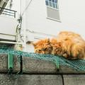 Photos: 猫撮り散歩2417