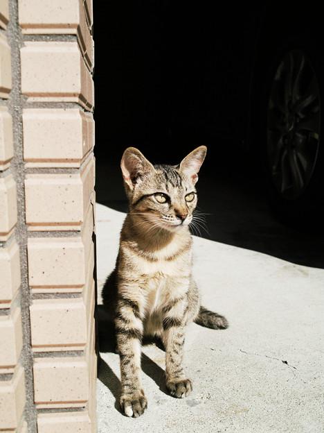 猫撮り散歩2419