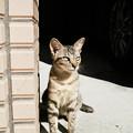 Photos: 猫撮り散歩2419