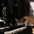 Photos: 猫撮り散歩2428