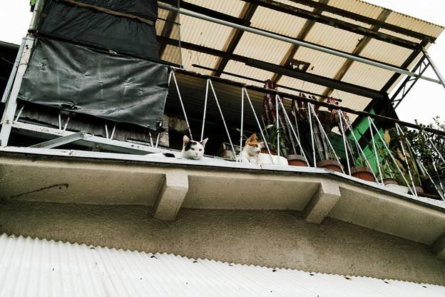 猫撮り散歩2429