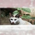 Photos: 猫撮り散歩2431