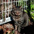 Photos: 猫撮り散歩2434