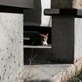 Photos: 猫撮り散歩2435