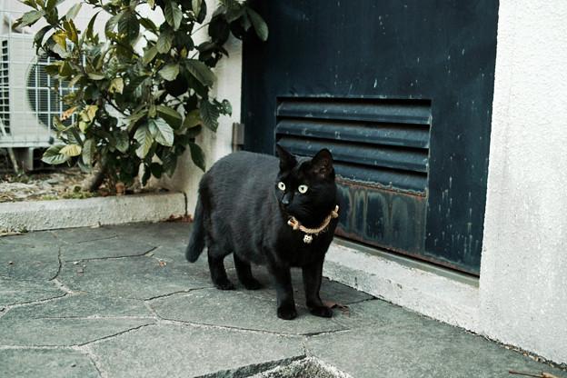 猫撮り散歩2436