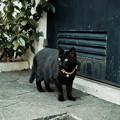 Photos: 猫撮り散歩2436