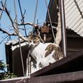 Photos: 猫撮り散歩2437