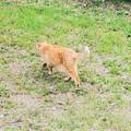 Photos: 猫撮り散歩2442