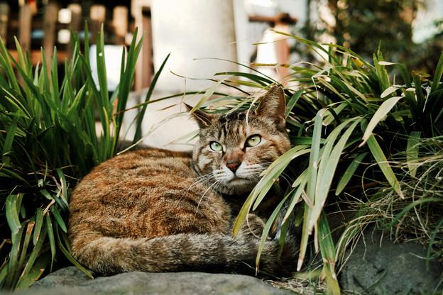 Photos: 猫撮り散歩2443