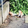 Photos: 猫撮り散歩2444