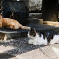 Photos: 猫撮り散歩2446