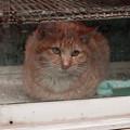 Photos: 猫撮り散歩2450