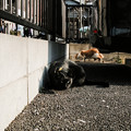 猫撮り散歩2452