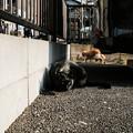 Photos: 猫撮り散歩2452