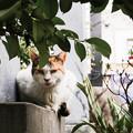 猫撮り散歩2453