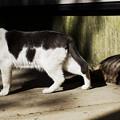 猫撮り散歩2454