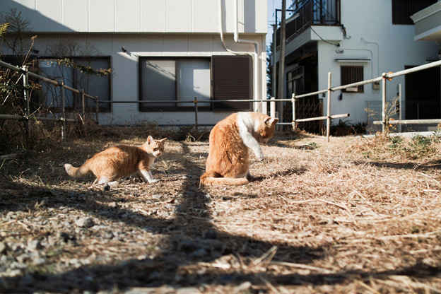 Photos: 猫撮り散歩2455
