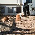 猫撮り散歩2455