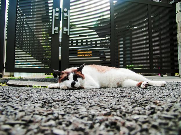 猫撮り散歩2457
