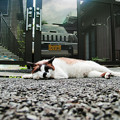 Photos: 猫撮り散歩2457