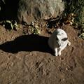 猫撮り散歩2458