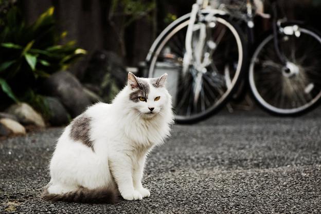 猫撮り散歩2459