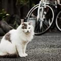 Photos: 猫撮り散歩2459