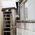 猫撮り散歩2460