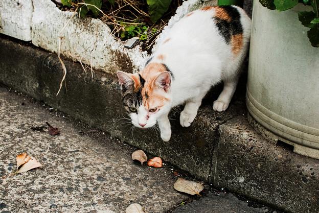 猫撮り散歩2461