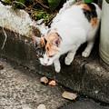 Photos: 猫撮り散歩2461
