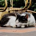 猫撮り散歩2464