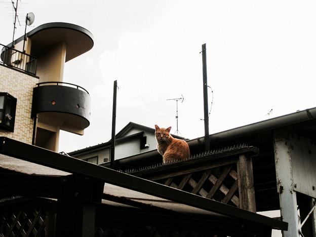 猫撮り散歩2465