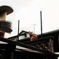 Photos: 猫撮り散歩2465